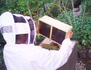 Installing honey bee package