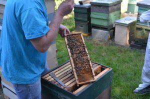 PSBA Apiary Hive Inspection