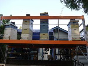 Honey Production Split brought in the honey