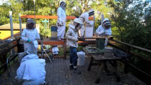 Danny Najera and a team of students making observations on and inserting sensors into our hives.