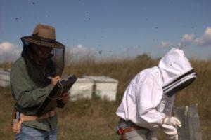Bee Informed Survey open until April 30th!
